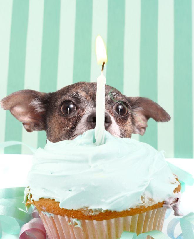 festa-di-compleanno-tema-righe